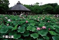 豊かな環境の自然公園